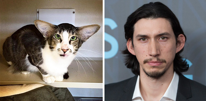 cat-look-alike-adam-driver-4