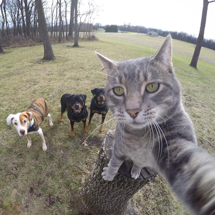 manny-cat-takes-selfies-dogs-gopro-13