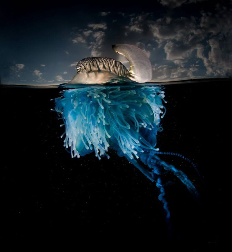 A-Parallel-Universe-My-Half-Underwater-Images-Show-What-Hides-Beneath-The-Waves2__880 (1)
