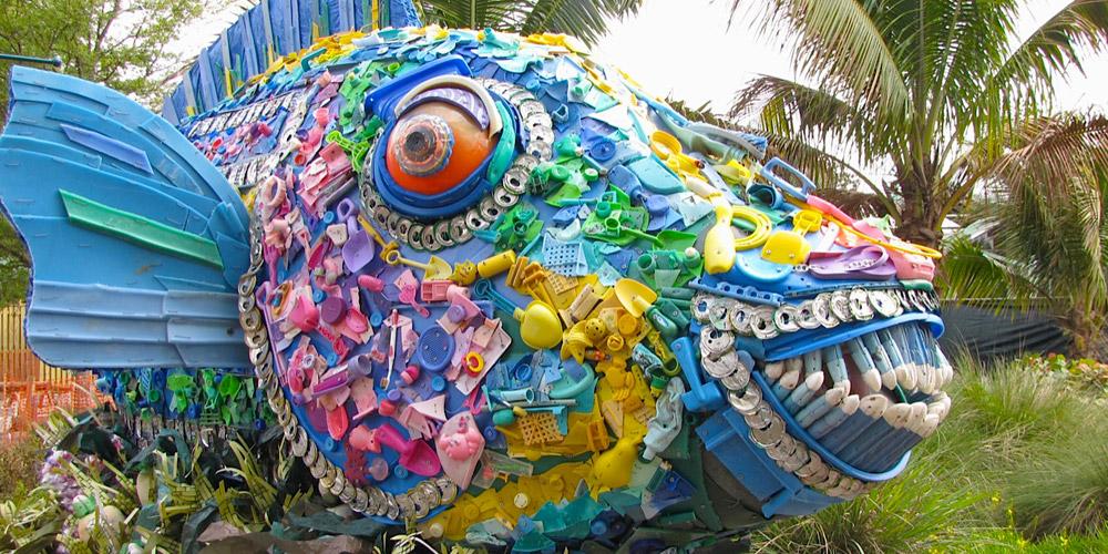 washed-ashore-parrotfish